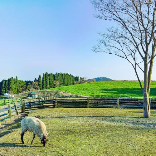 高千穗牧場