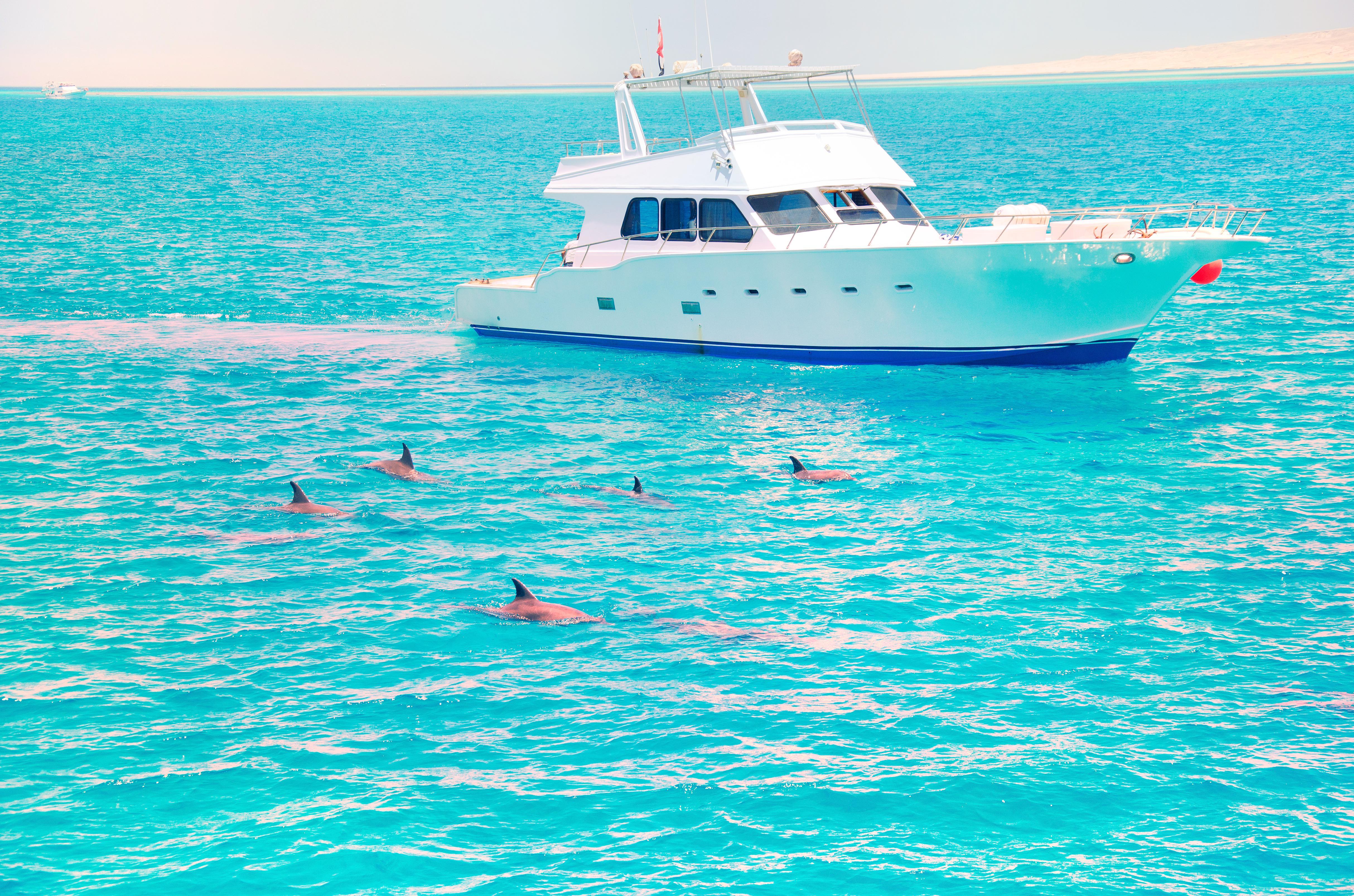 Dolphin Wild Cruises Jervis Bay