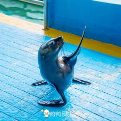 Shishi Ocean World 여행 사진