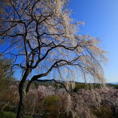 上野公園張用戶圖片