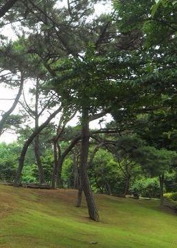 한국자생식물원