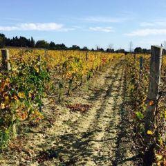 O'Vineyards Table d'Hote用戶圖片