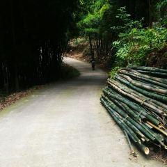 Lugou Bamboo Sea User Photo