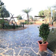 阿布扎比民俗村用戶圖片