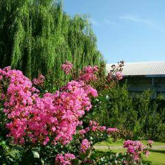 Natural Scenic Spots of Huyu User Photo