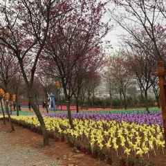 Guiyang Cherry Garden User Photo