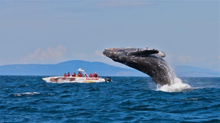 全球觀鯨指南 l 去哪裡邂逅「海洋巨人」?看這篇就對了!