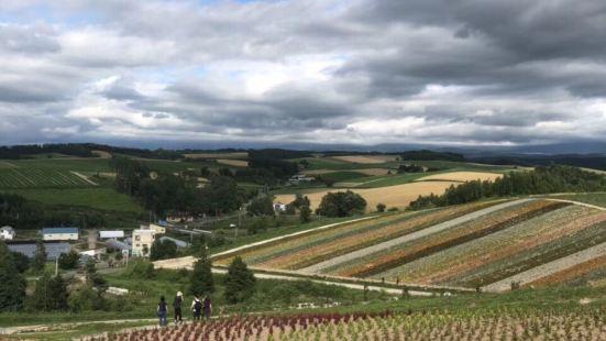 婚纱摄影热门景点,东方的普罗旺斯,整个富良野地区以富田农场的