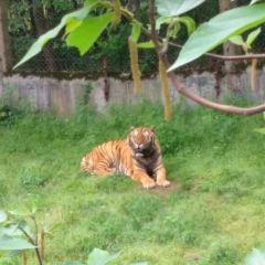 九峰森林動物園用戶圖片