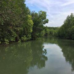 夢幻紅樹林張用戶圖片