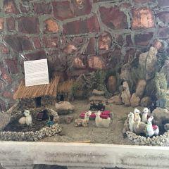 Alpaca Museum User Photo
