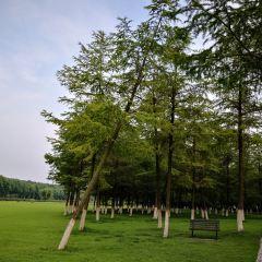 宜興國家森林公園用戶圖片