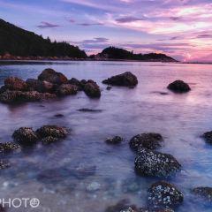 大樹島用戶圖片