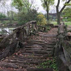 Botanischer Garten Rombergpark用戶圖片