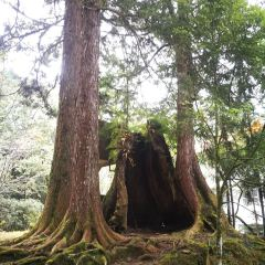 Giant Tree Cluster Trail User Photo