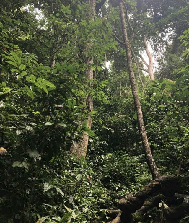 시솽반나 우림 계곡