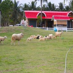 SHEEP HOUSE User Photo