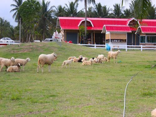 喜洋洋綿羊農場