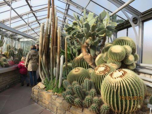 蘇黎世植物園
