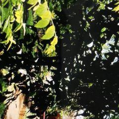 Herb & Spice Garden User Photo