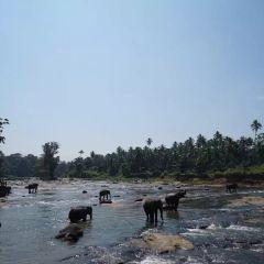 辛哈拉加森林保護區用戶圖片