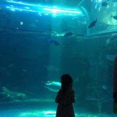 Aqua Planet Yeosu User Photo