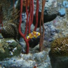 Underwater World Pattaya User Photo