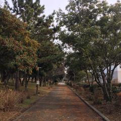 臨空公園用戶圖片