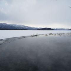 屈斜路湖砂湯用戶圖片
