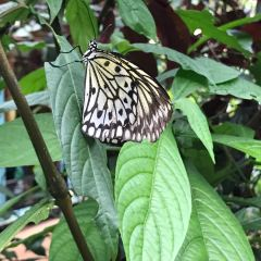 Palawan Butterfly Garden User Photo
