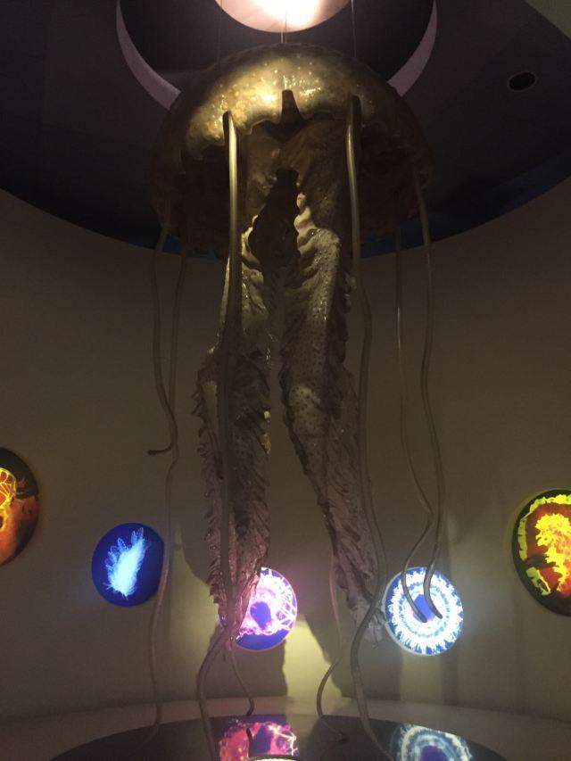 Centro Musei Scienze Naturali Napoli