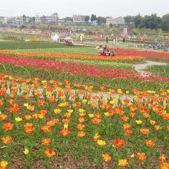 인청 꽃밭 여행 사진