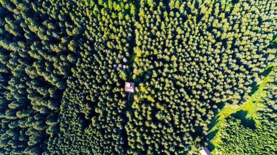在黑龙江的大兴安岭与松嫩平原的交界的地方,有一处别样的景观