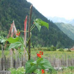 Shuzhengzhai User Photo