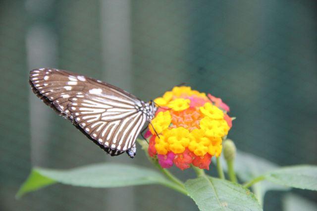 Jumalon Butterfly Sanctuary