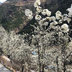 Sha'erxiang User Photo