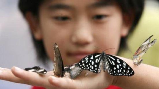 世界百萬蝴蝶展霜淇淋嘉年華