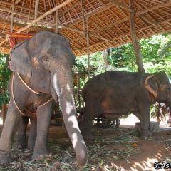 KokChang Safari Elephant Trekking User Photo