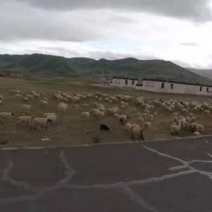 帕羊用戶圖片