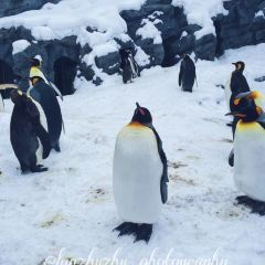 旭山動物園用戶圖片