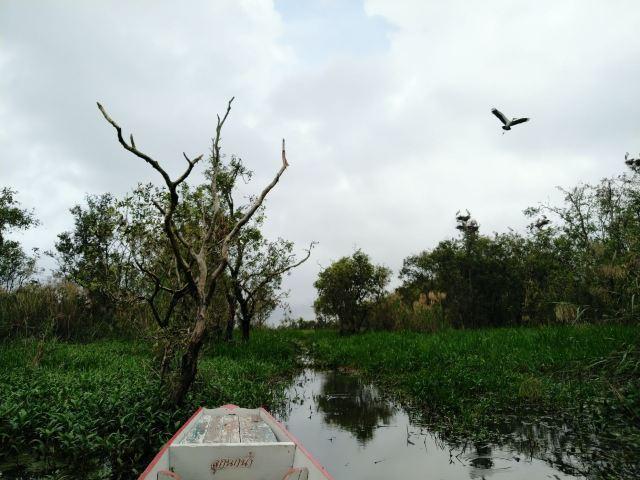 Thale Noi Waterfowl Park