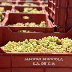 Shade Winery用戶圖片