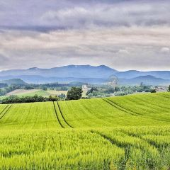 Panorama Road User Photo