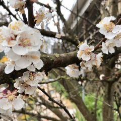 Kubota Gardens User Photo