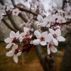 Renshoushan Park User Photo