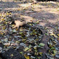 Angkor Archaeological Park User Photo