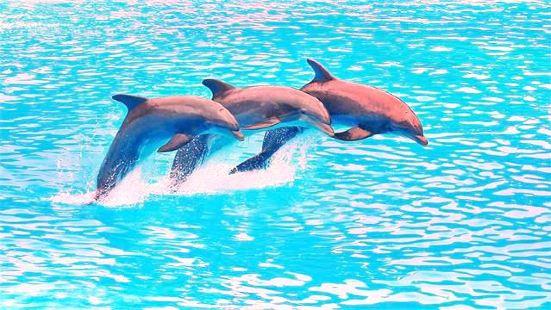 芭提雅海豚館
