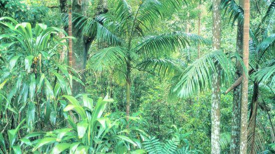 布里斯本森林公園