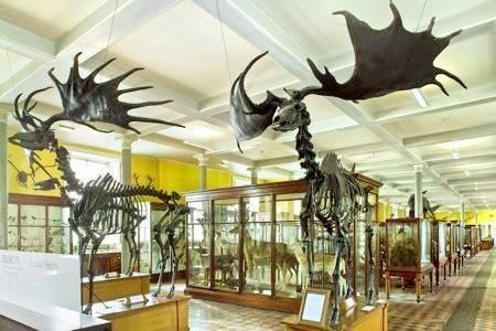 National Museum of Ireland - Natural History