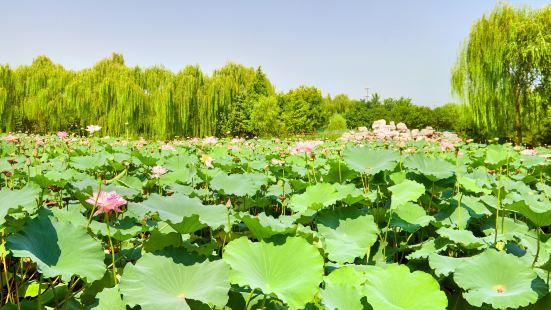 Dongsheng Ba Jia Jiaoye Park